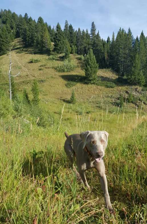 My dog Remy running on the trails