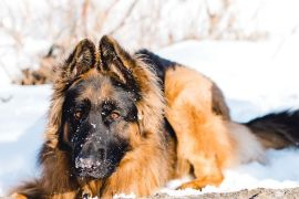 Should You Feed Your Dog a Raw Diet?