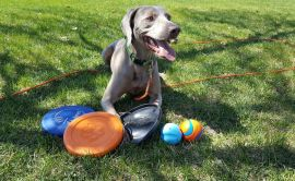 Most Durable Dog Toys 2019