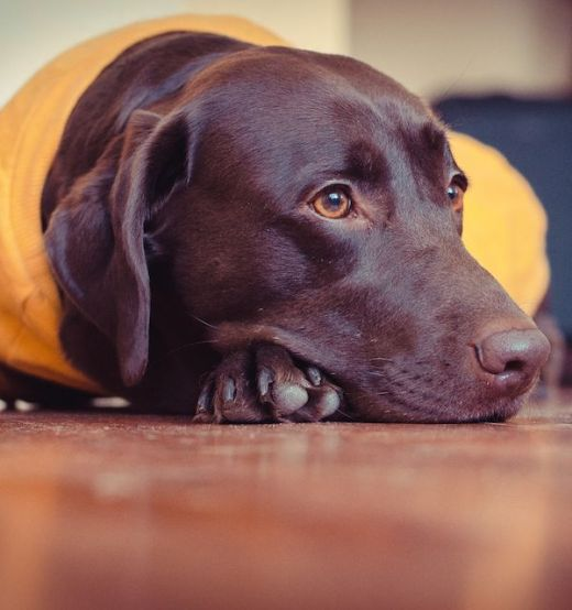 Medication for Dogs During Fireworks and When to Use It | ThatMutt com