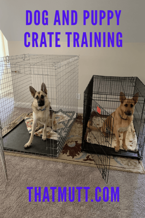Dog and puppy crate training