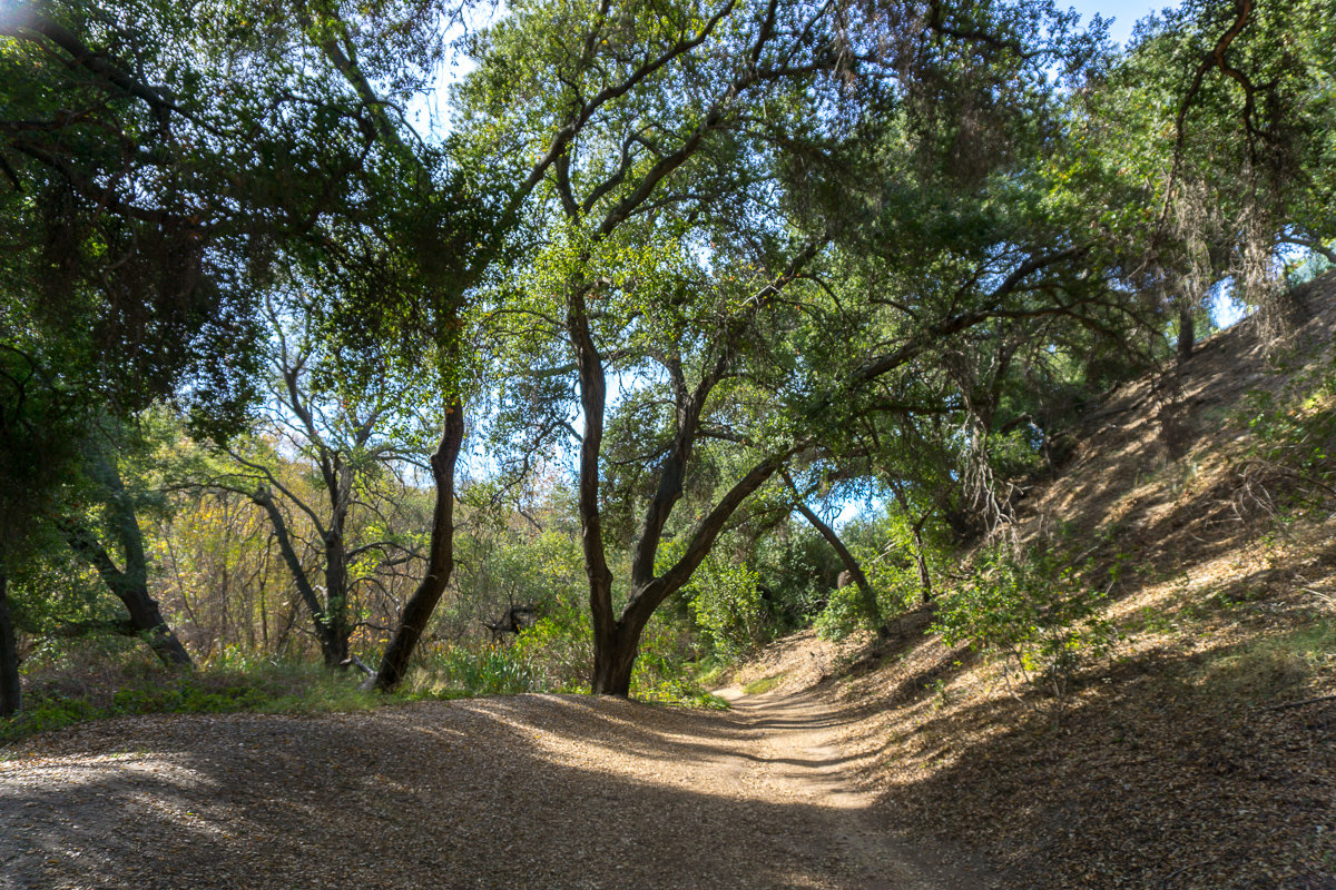 Borrego Canyon Trail in Whiting Ranch Wilderness Park