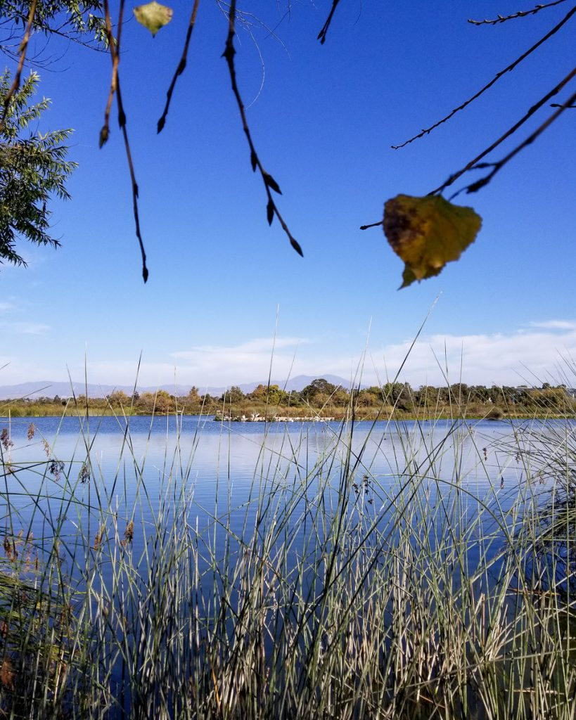 Lake at the San Joaquin Wildlife Sanctuary