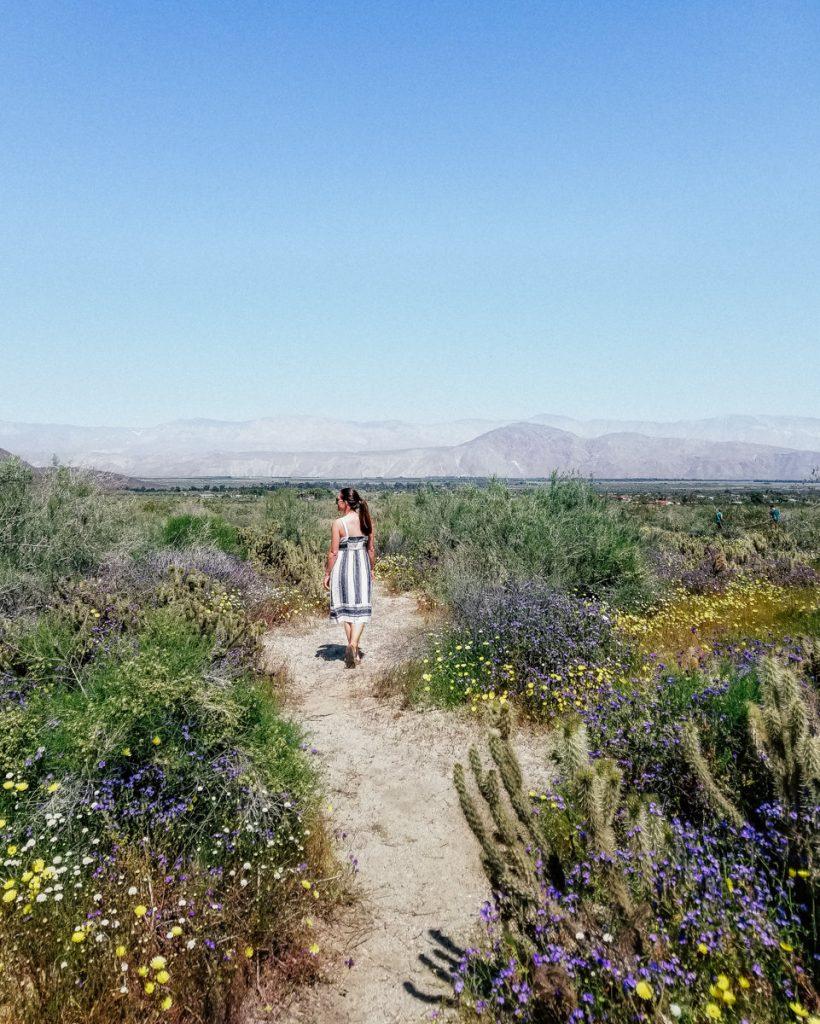Hiking trail in Anza Borrego Desert State Park