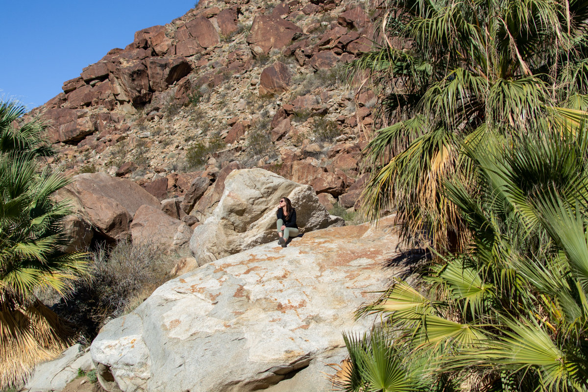 Scenery on the Borrego Palm Canyon Trail
