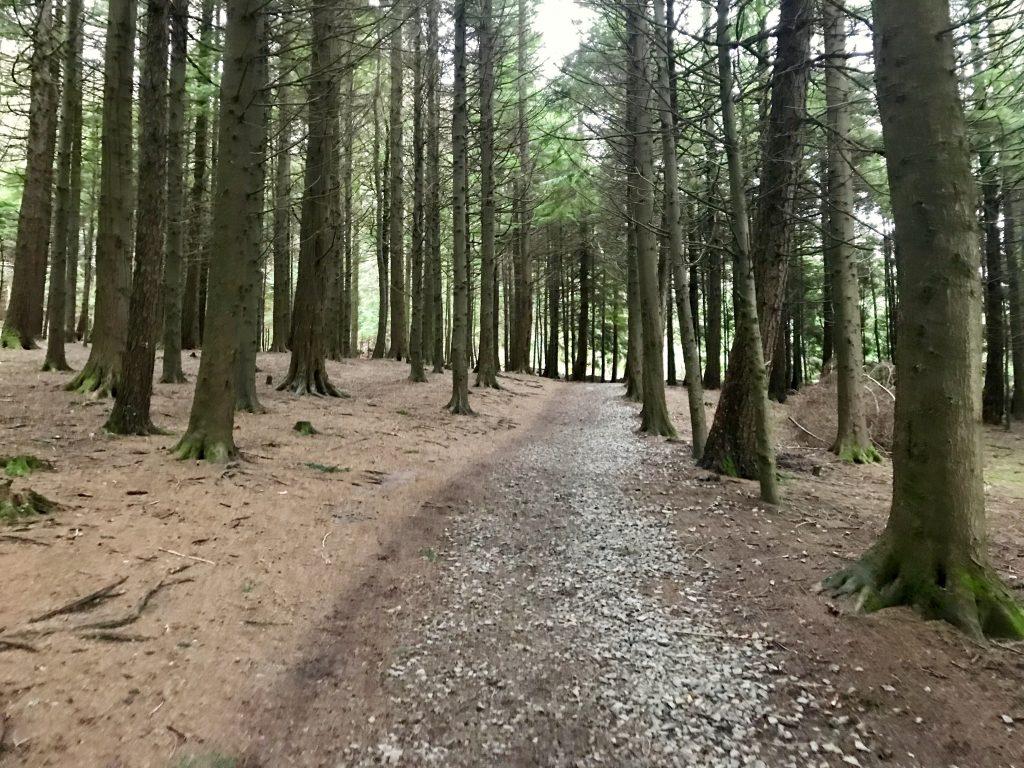 Hiken in Ierland betekent veel bos