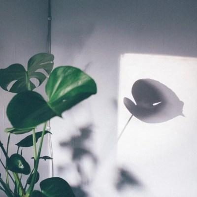scandinavian feeling hygge shadow plant