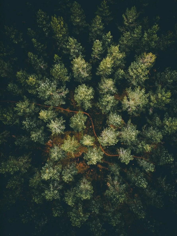 airpixels_scandinavia_view_forest_green