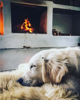 scandinavian feeling cozy dog fireplace autumn