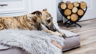 scandinavian feeling dog cozy labbvenn bed