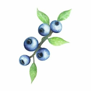 Blueberries - Wall stories from ThatsMine