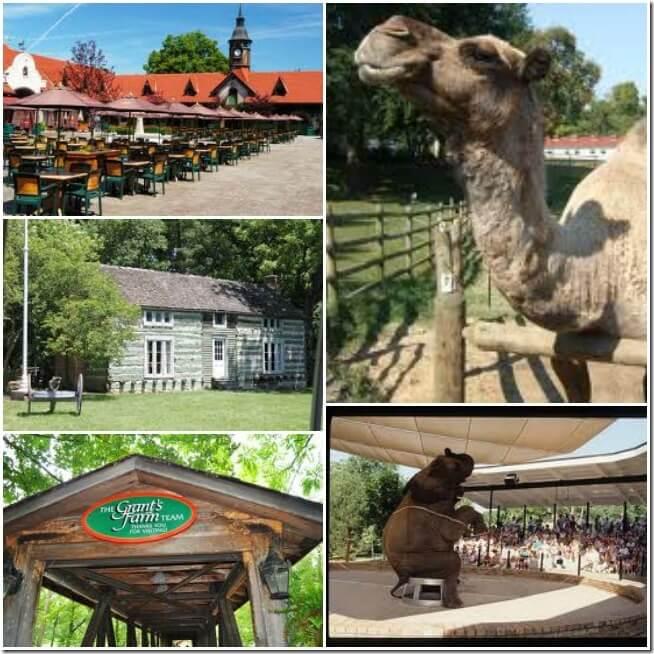 Grant's farm Collage