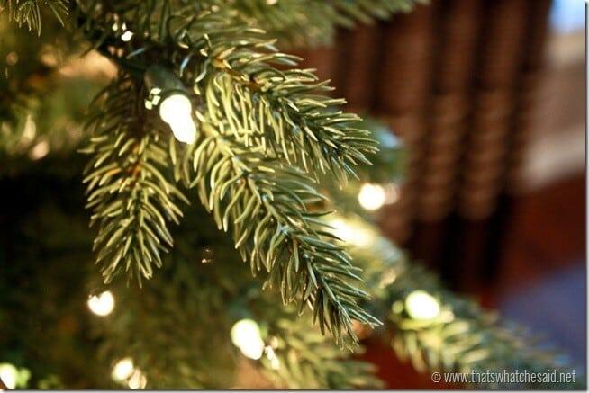 Close_up-of-kennedy-fir