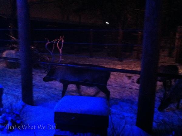 reindeer zoolights