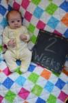 marlowe 2 weeks