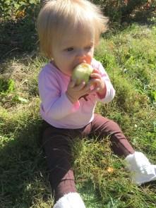 marlowe apples