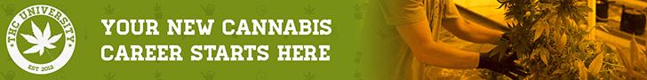 Cannabis Growing Career