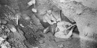 Miners use picks in the California Gold Rush
