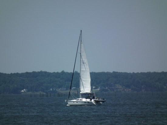 Big cat prowls the Potomac