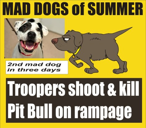 Mad Dogs of Summer