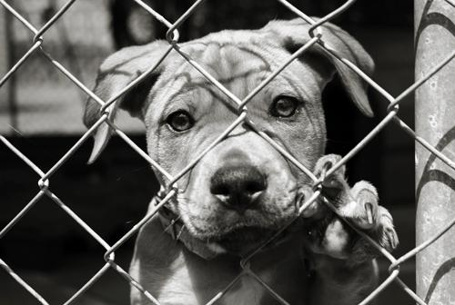 dog-fence-500