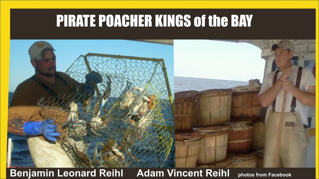 Pirate Poacher Kings of the Bay