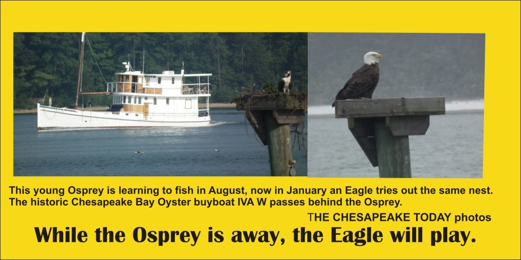 While the osprey is away the eagle will play