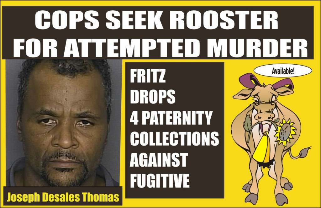 Cops seek rooster for attempted murder