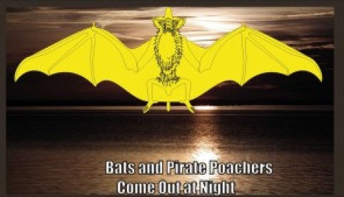 Bats and Pirate Poachers Come out at Night on Chesapeake