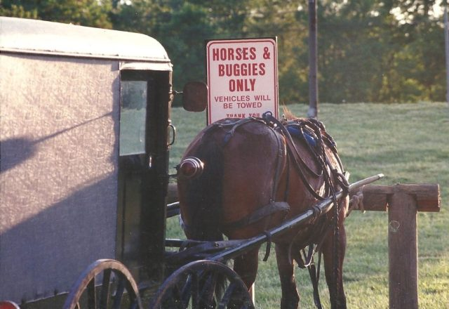 An Amish buggy drawn by a single horse of the type commonly used by Amish farmers in St. Mary's County. THE CHESAPEAKE TODAY photo