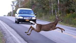deer-crashes-in-delaware