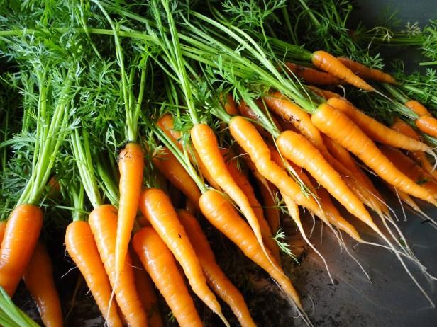carrot tops
