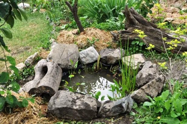 tyre pond example