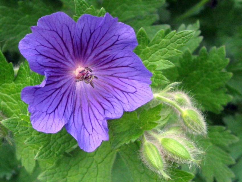 6 Plants Which Naturally Repel Mosquitoes The Diy Life
