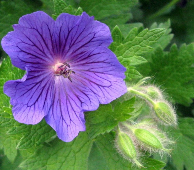 6 Plants Which Naturally Repel Mosquitoes