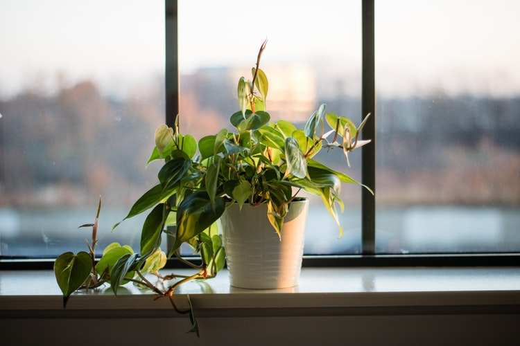 How To Keep Your Plants Alive When You're On Vacation