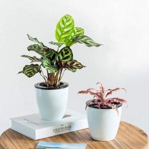 self watering pot plants