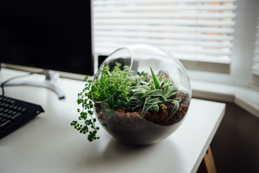 The Absolute Beginners Guide To Making Your Own Terrarium The Diy
