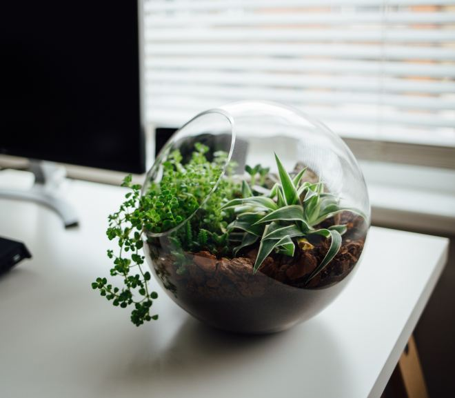 The Absolute Beginners' Guide to Making Your Own Terrarium