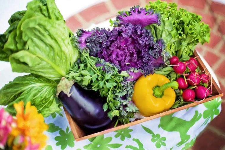 sustainable veggie garden