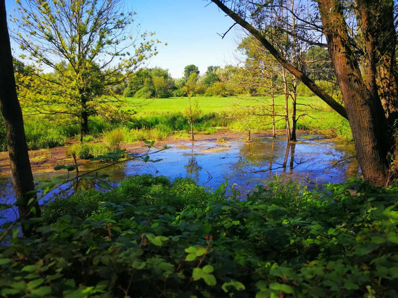 Sumpfland am Urdenbacher Altrhein