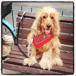 חנות לבעלי חיים - הכלב גוגל