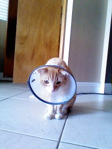 my miserable coned cat