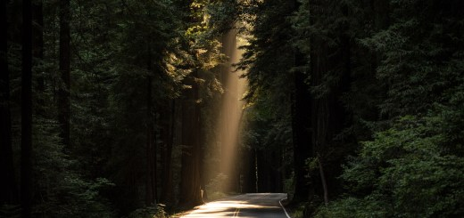 light through the trees on a road