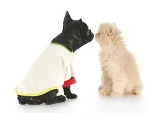 Dog and cat © Willeecole | Dreamstime.com