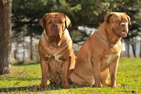 Double dog dare © Vitaly Titov | Dreamstime.com