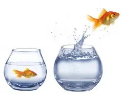 Crazy goldfish © Witold Krasowski | Dreamstime.com