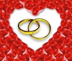 Wedding rings and roses   freedigitalphotos.net