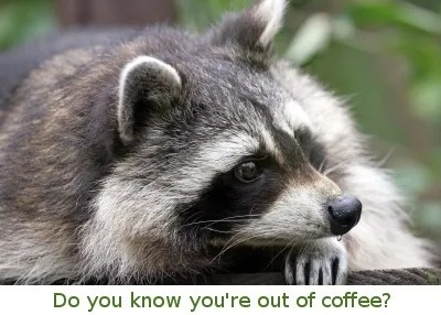 Raccoon Image Credit: © James Barker