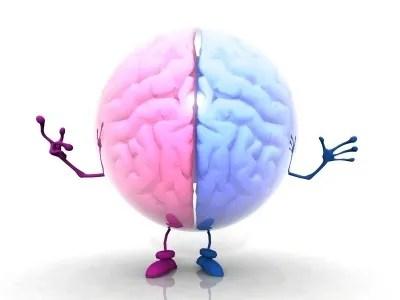 Brain © njaj| freedigitalphotos.net